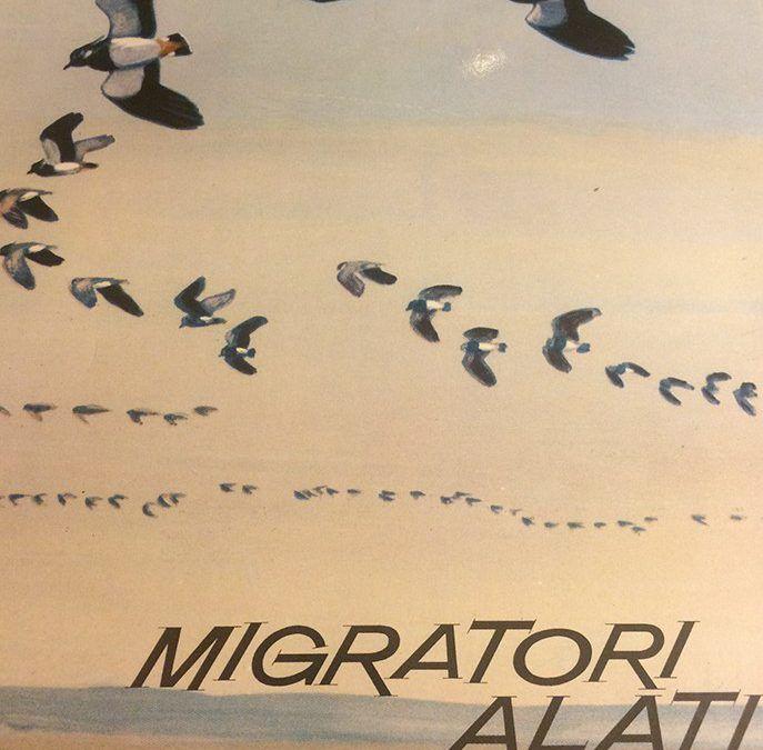"""""""Migratori Alati"""" di Mario Rotondi al mercatino"""